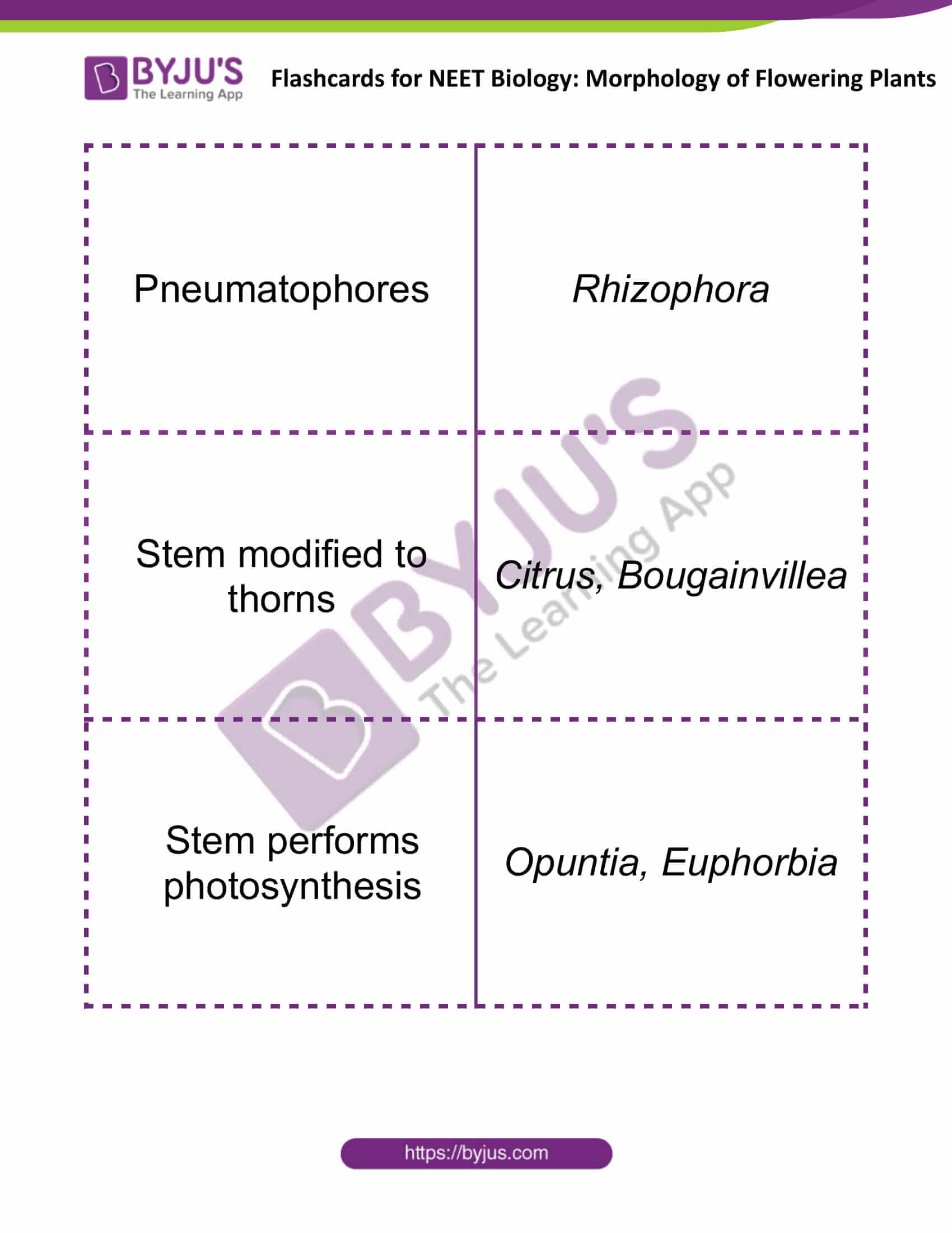 flashcards for neet biology morphology of flowering plants 02