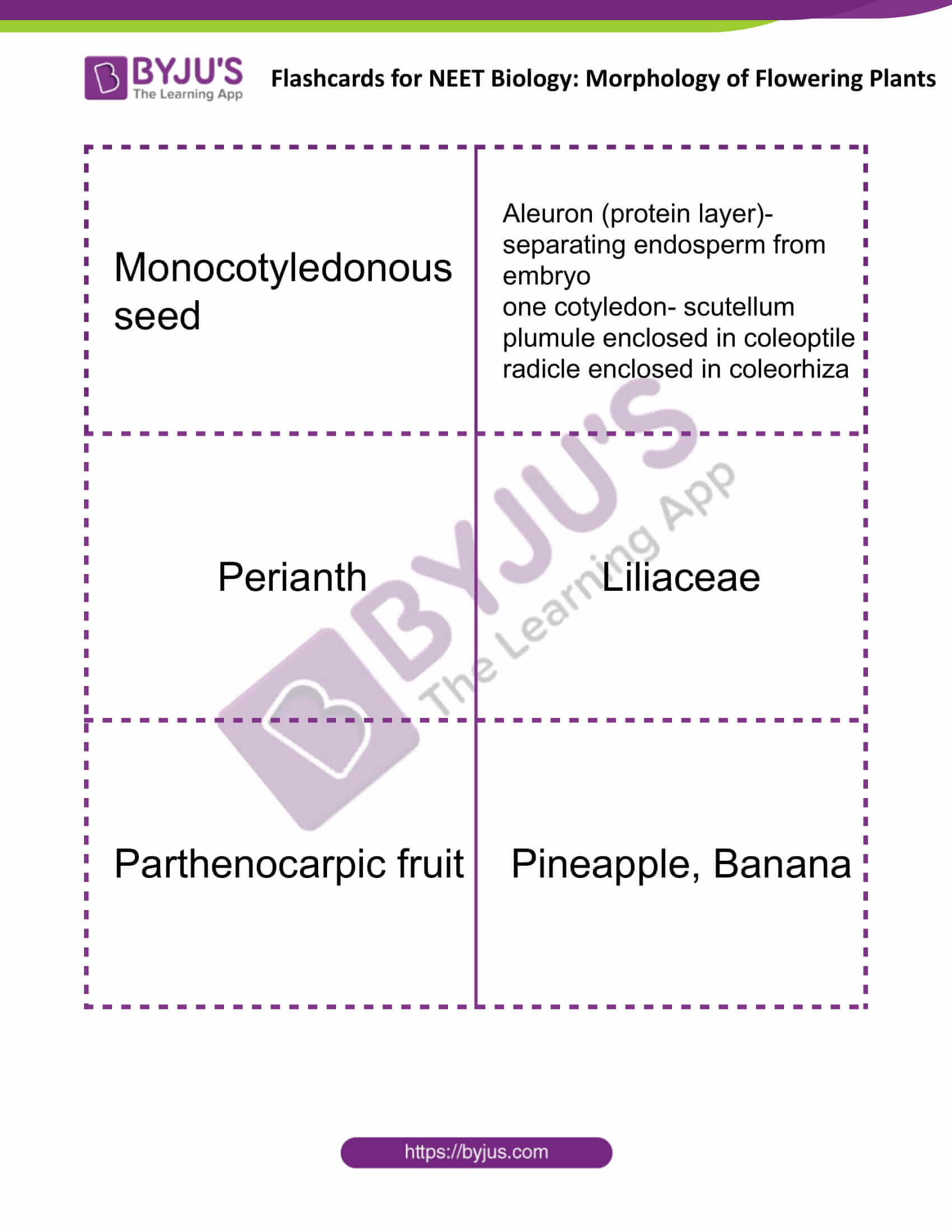 flashcards for neet biology morphology of flowering plants 12