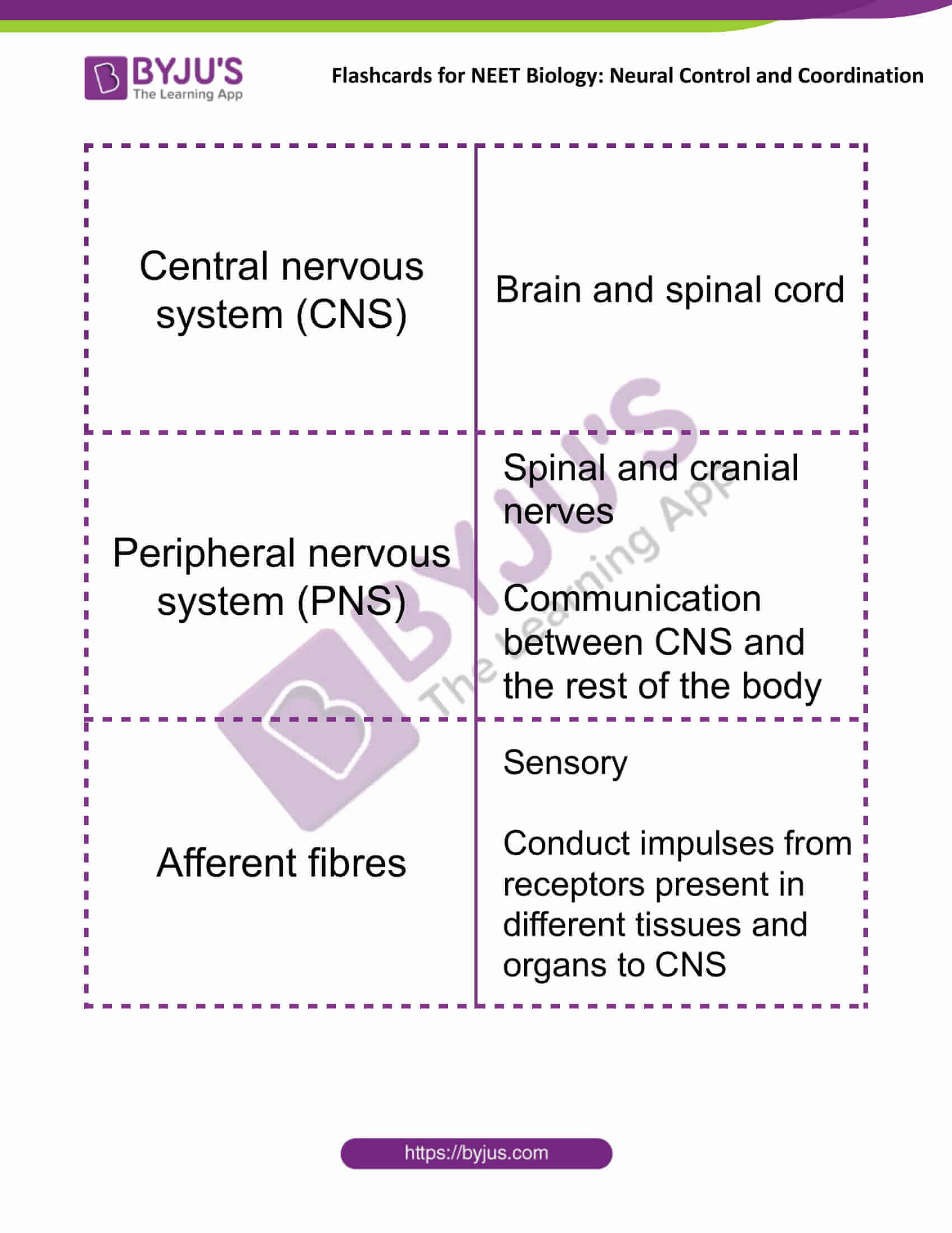 flashcards for neet biology neural control and coordination 01