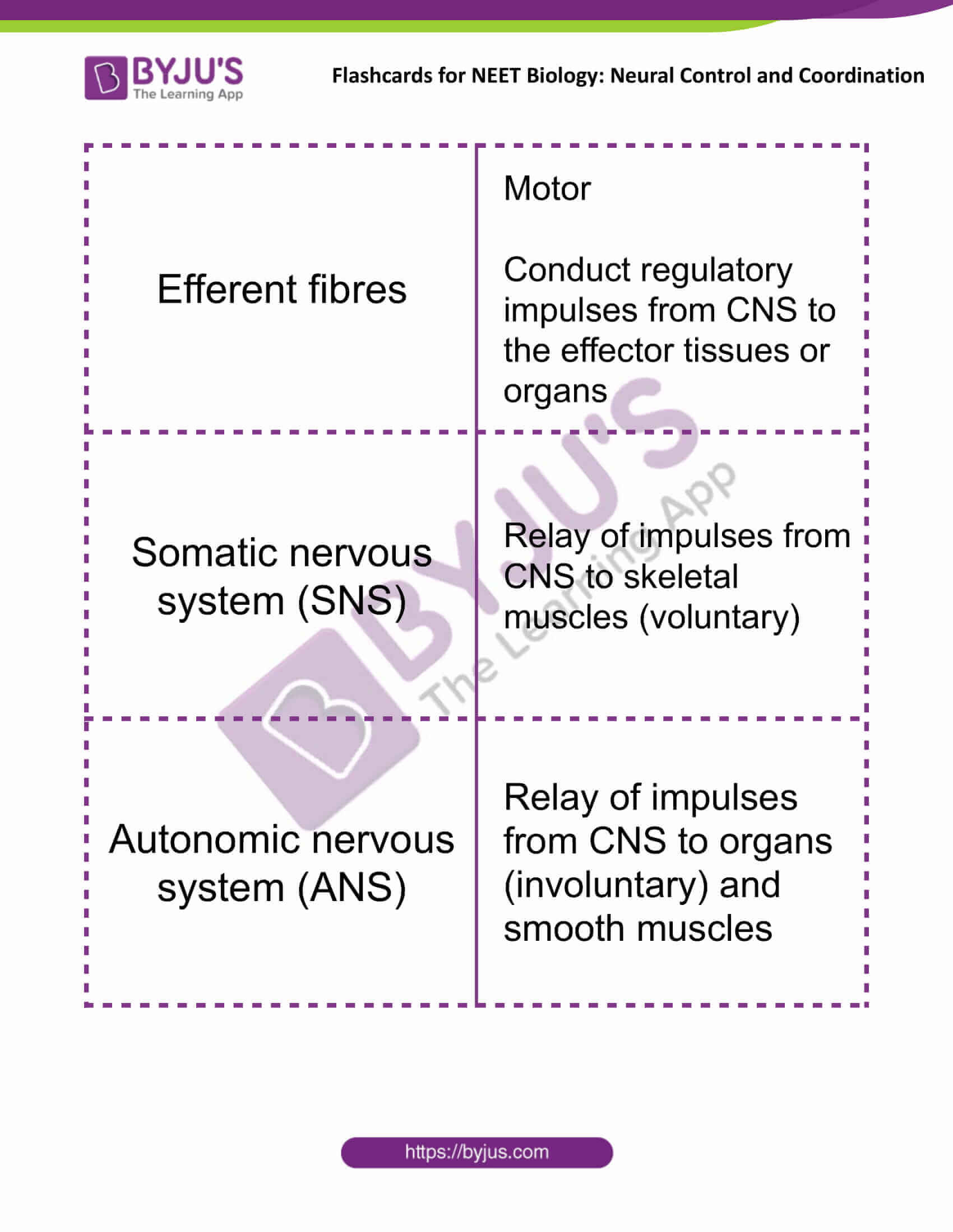 flashcards for neet biology neural control and coordination 02