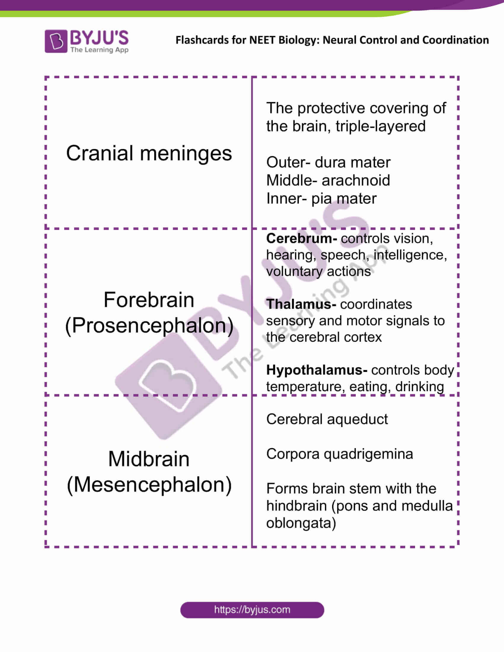 flashcards for neet biology neural control and coordination 06