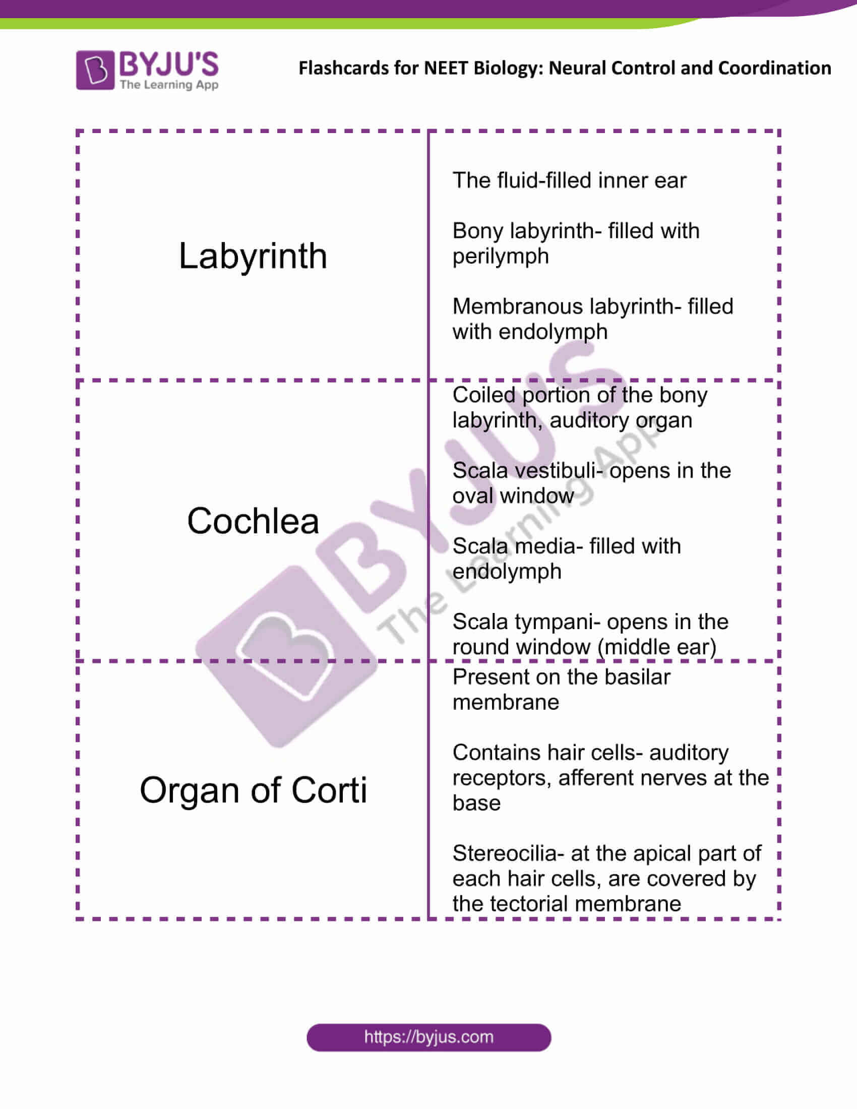flashcards for neet biology neural control and coordination 13