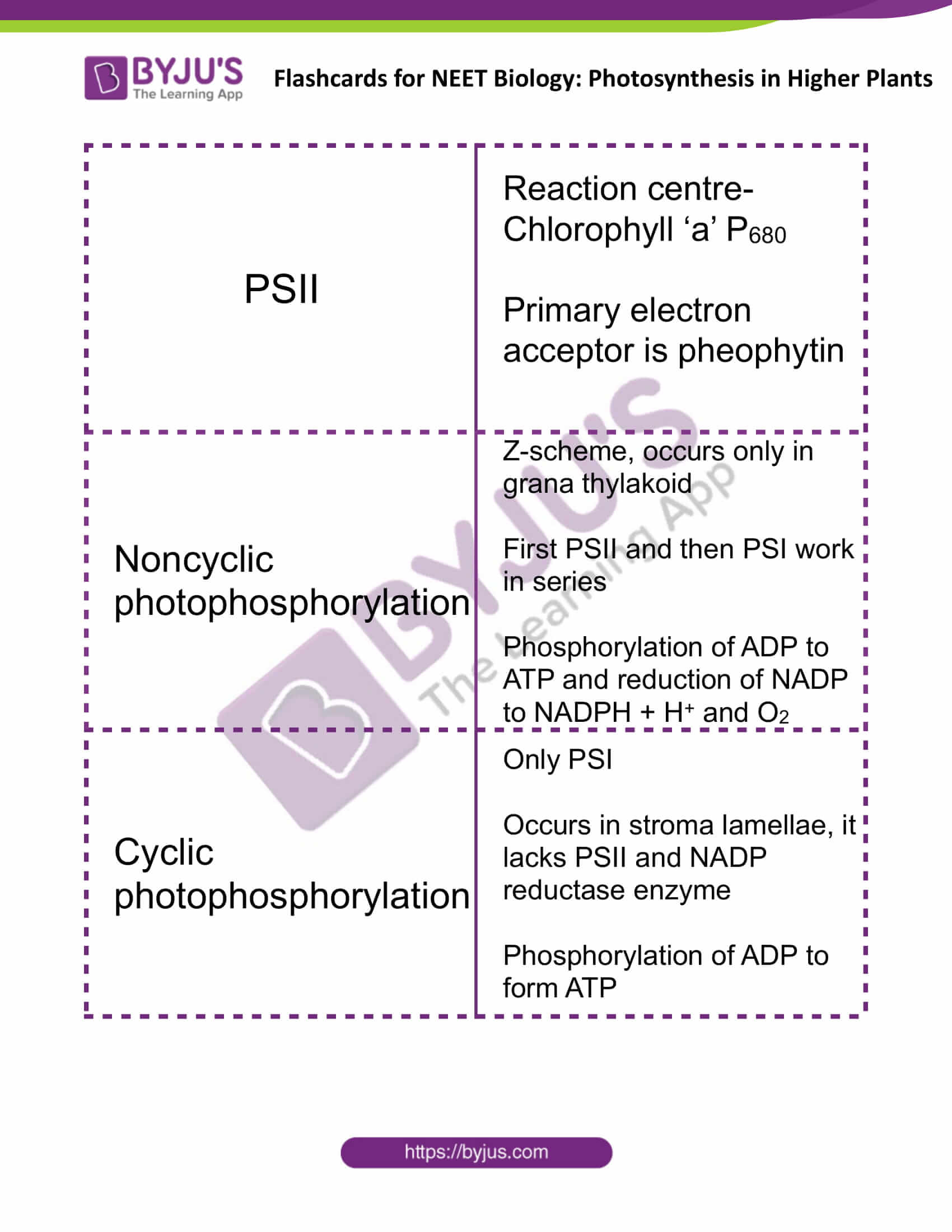 flashcards for neet biology photosynthesis in higher plants 4