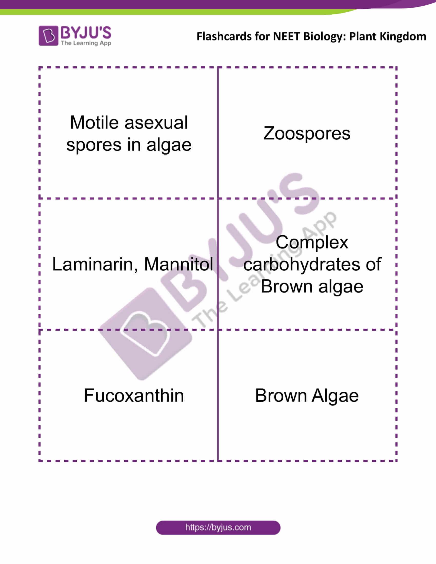 flashcards for neet biology plant kingdom 3