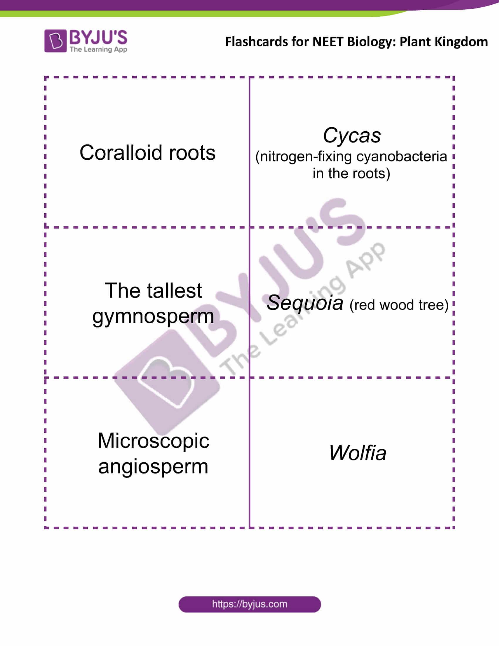 flashcards for neet biology plant kingdom 7