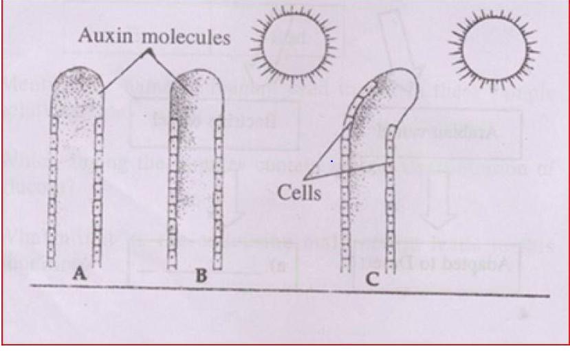 KBPE Class 10 Science 2015 Question paper Question 14