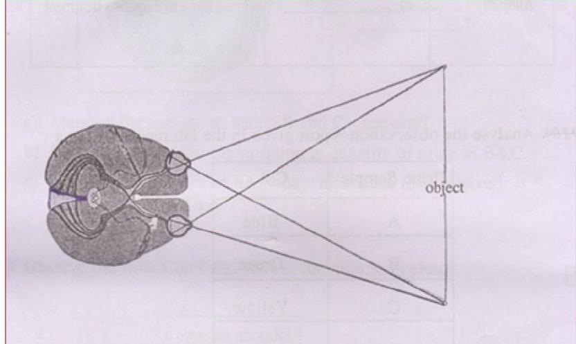 KBPE Class 10 Science 2015 Question paper Question 7
