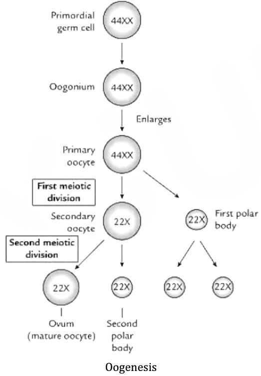 KCET 2020 Biology Paper Q46
