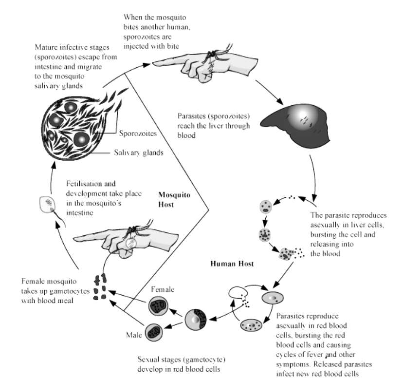 KCET 2020 Biology Paper With Solutions Q4