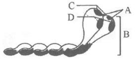Solved Paper of KCET 2015 Biology