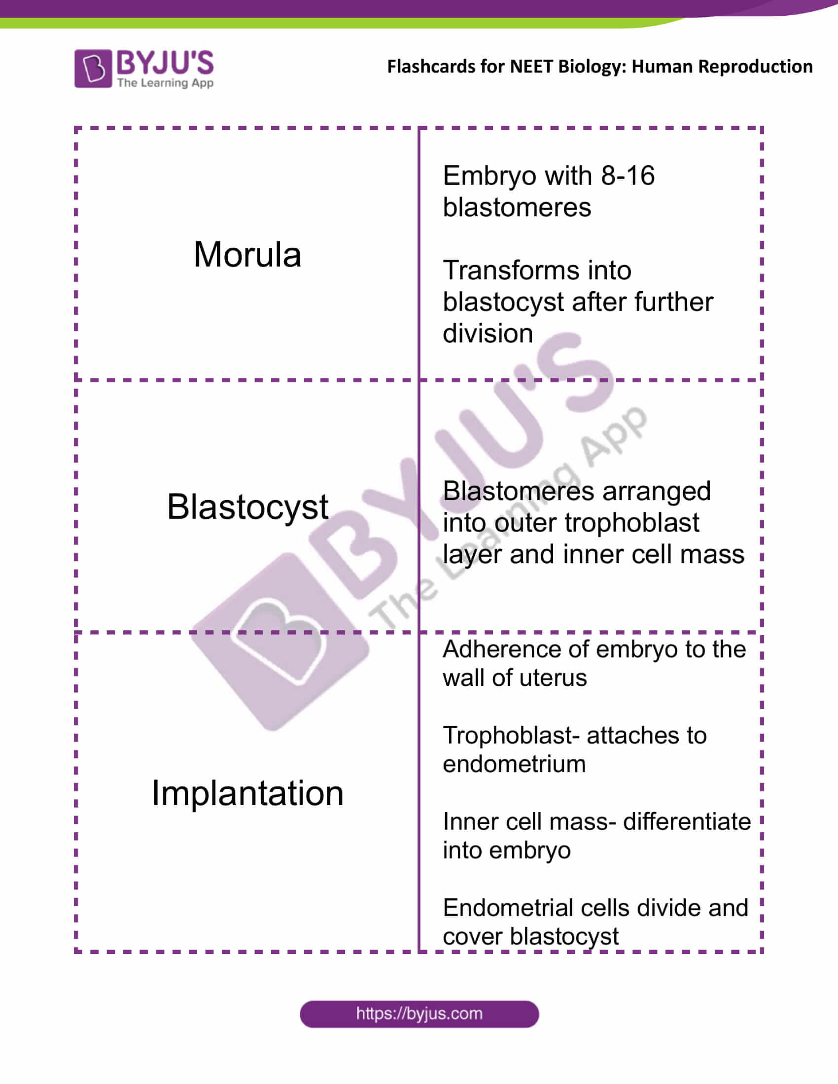 class 12 human reproduction 11