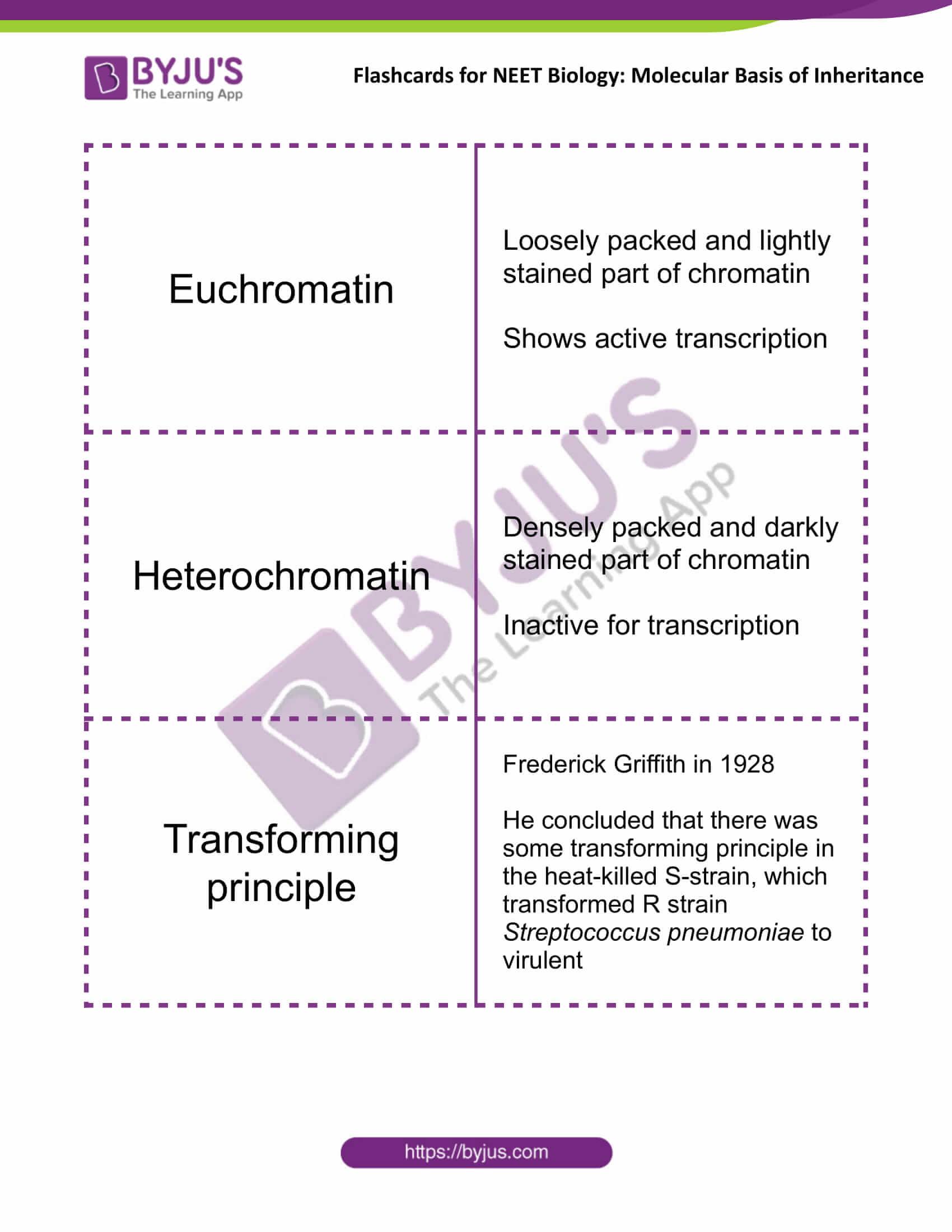 class 12 molecular basis of inheritance 06
