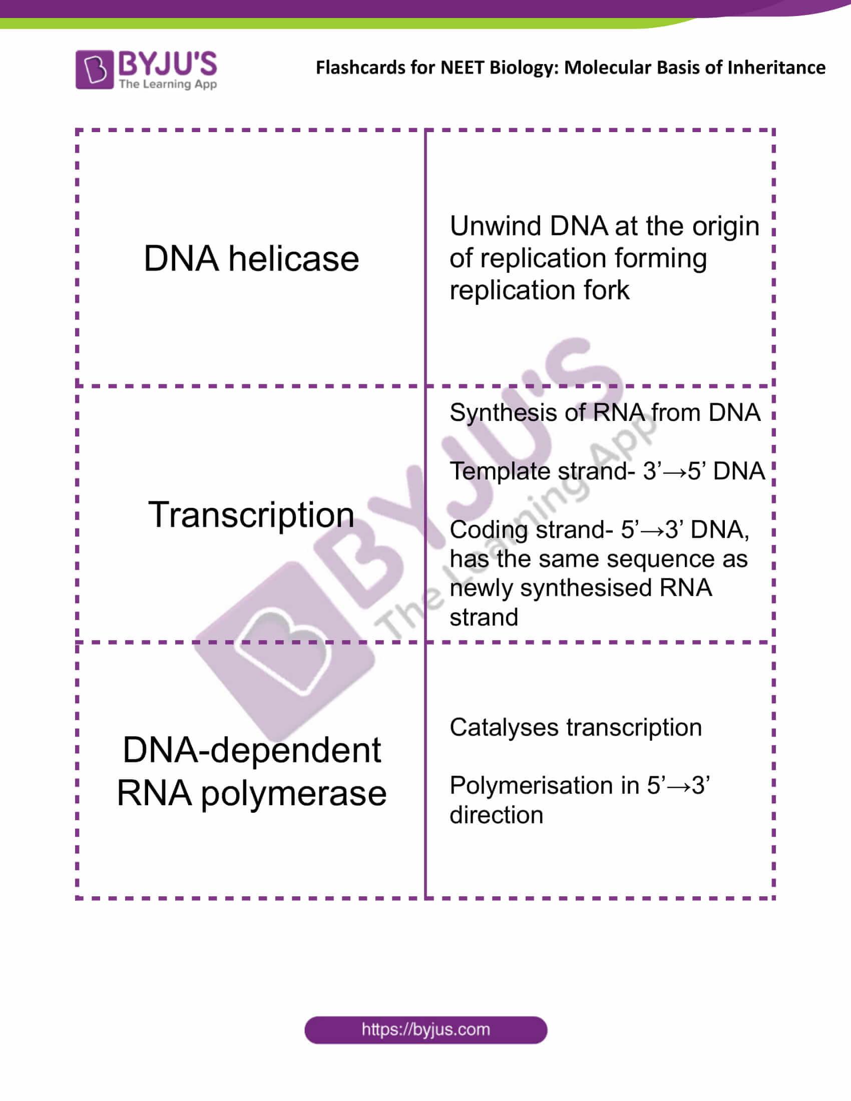 class 12 molecular basis of inheritance 09