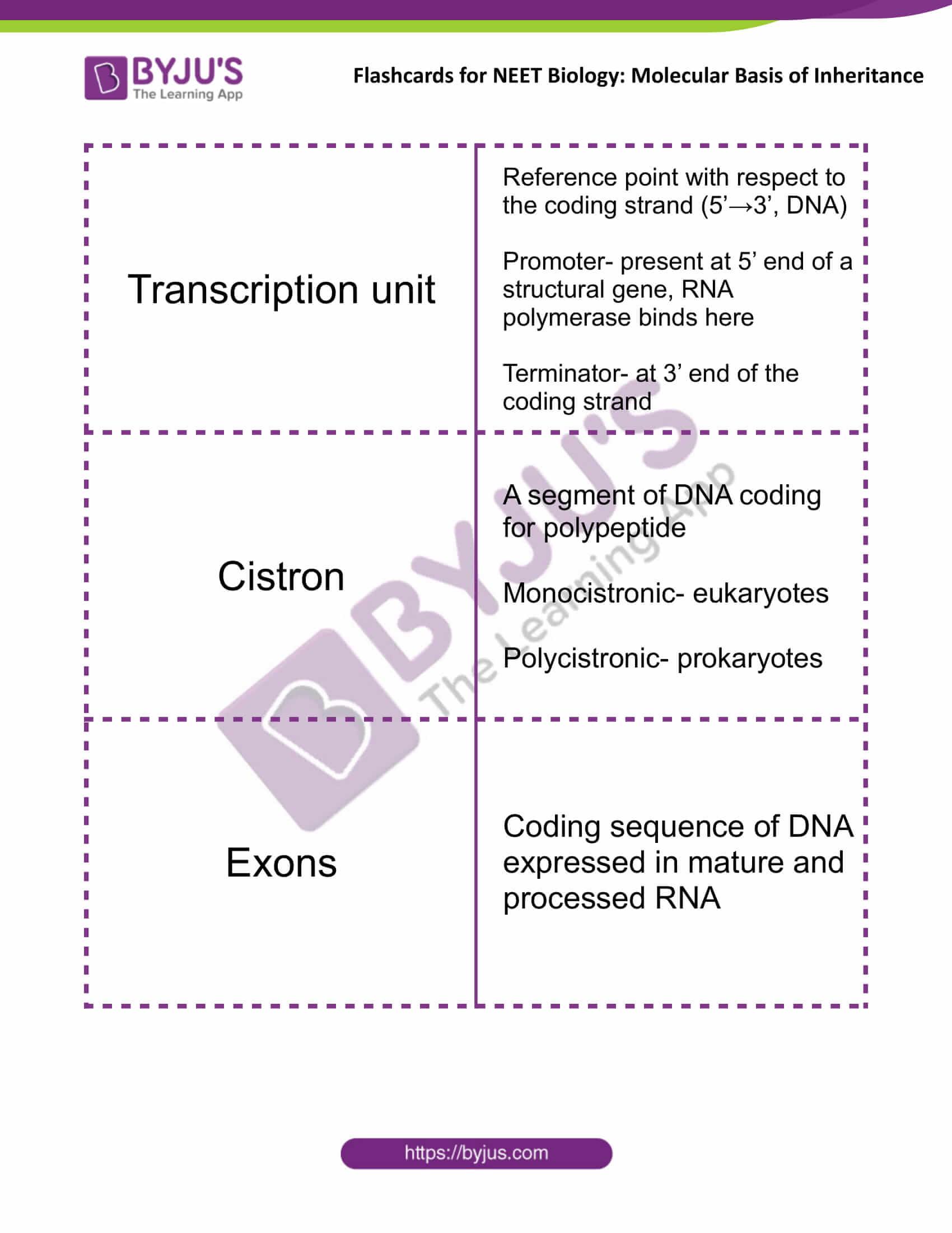 class 12 molecular basis of inheritance 10
