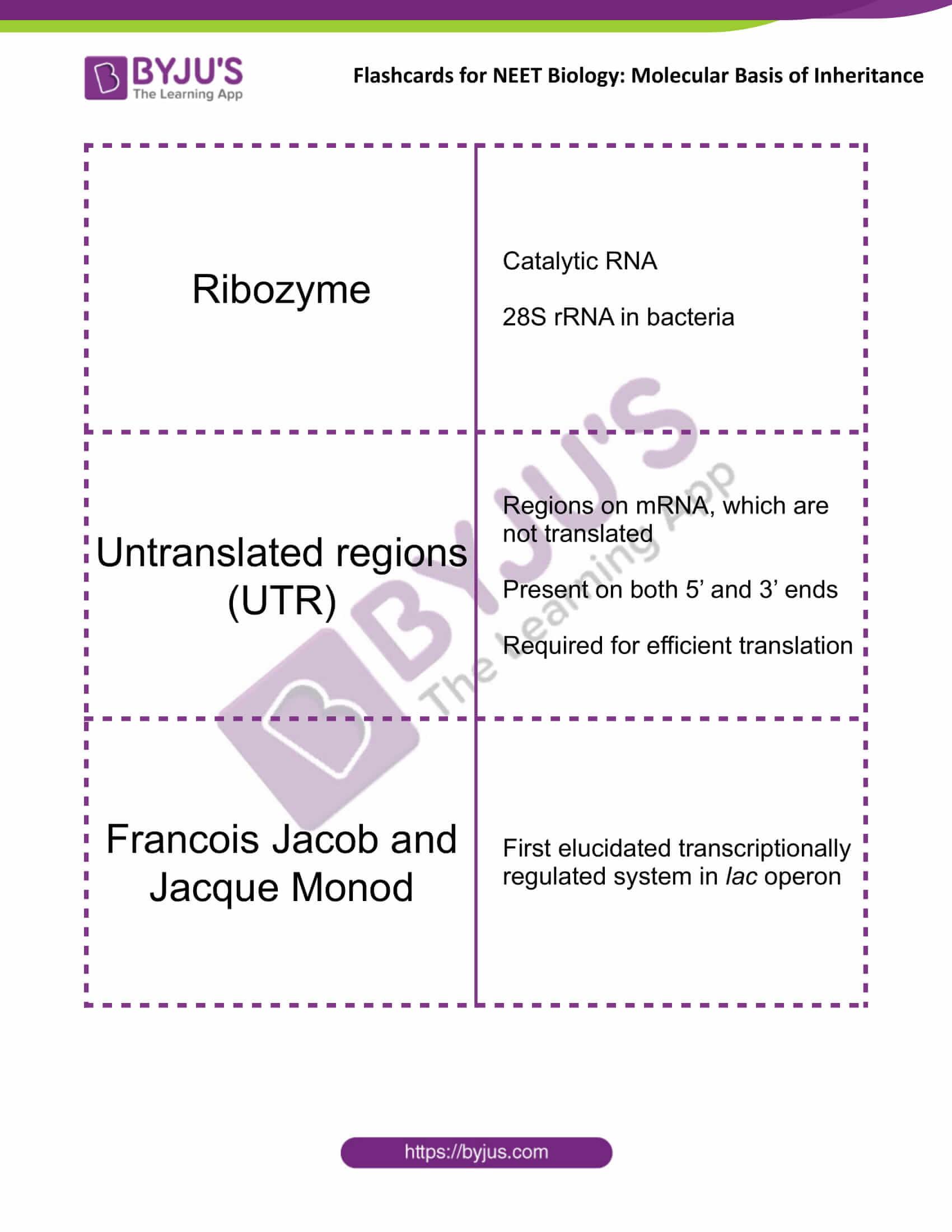class 12 molecular basis of inheritance 14