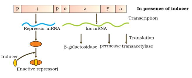 KVPY SX 2017 Biology Paper Solved