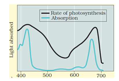 KVPY SX 2018 Biology Paper Solved
