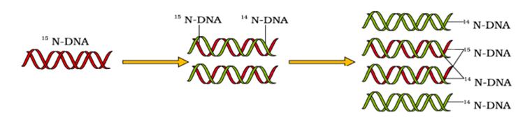 KVPY-SX-2019 Biology Paper Solved