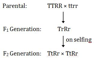 Solutions of KVPY-SX-2019 Biology