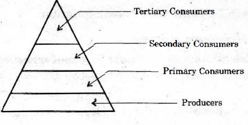 Telangana Board Class 10 Science Part II 2016 Question Paper Part A Section II Question 13