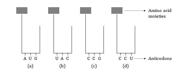 KVPY-SX-2016-Biology-Question-Paper-Question-27