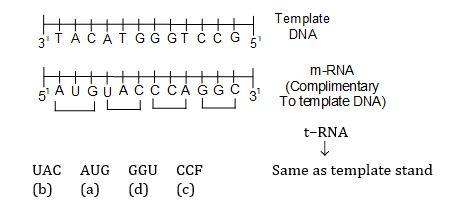 KVPY-SX 2016 Biology Question Paper Question 27 Solution