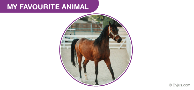My Favourite Animal Horse Essay for Class 3