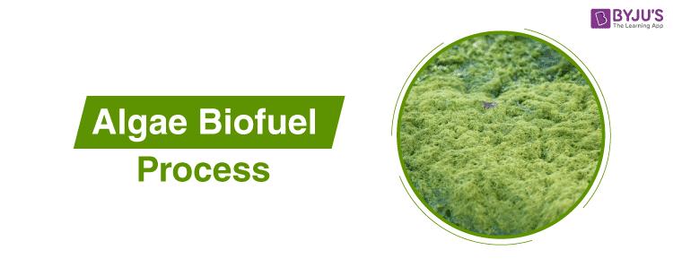 Algae Biofuel Process