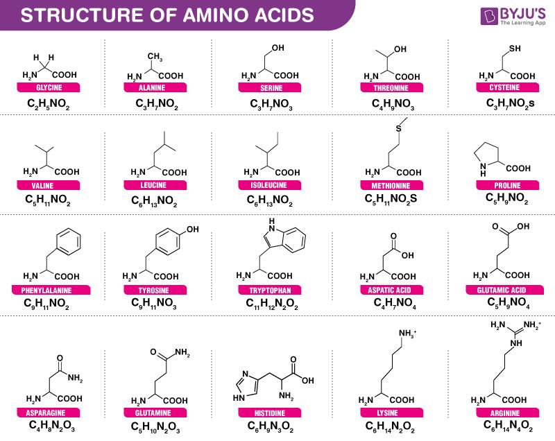 Amino Acid Structure and Molecular formula