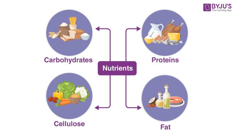 Nutrients &Balanced Diet
