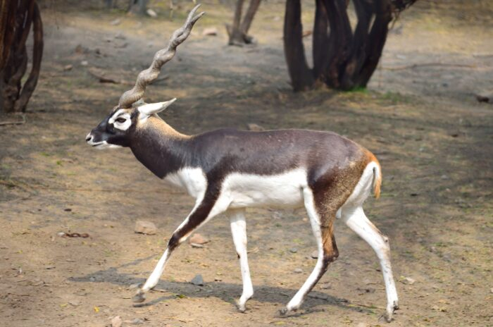 Blackbuck-UPSC Environment and Ecology