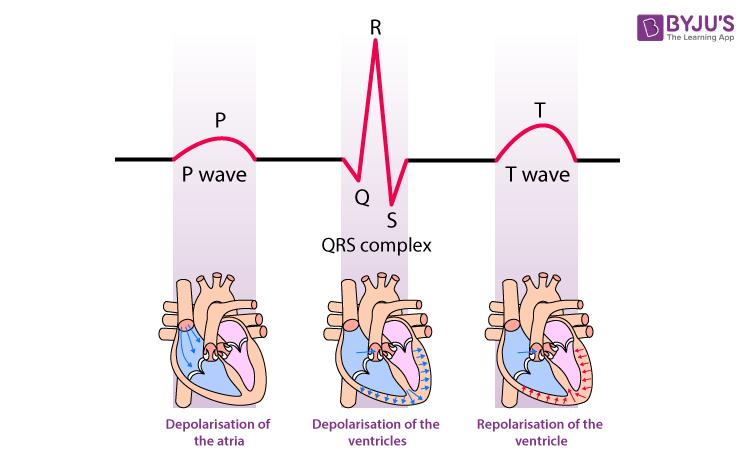 Electrocardiogram Wave