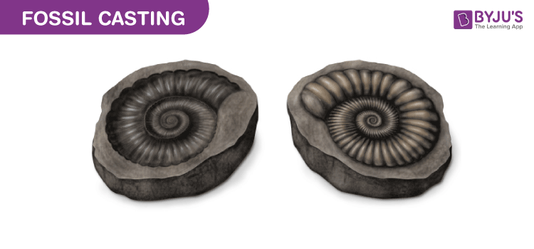 Fossil Casting