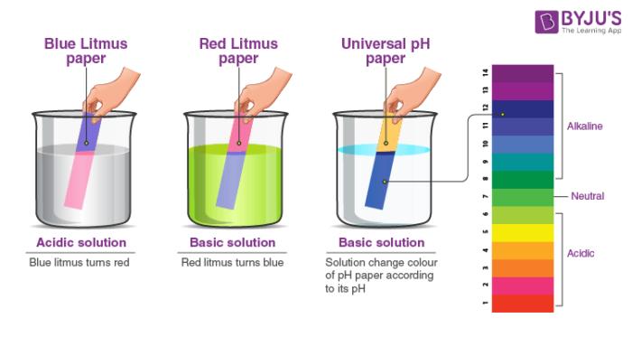 Litmus Paper Experiment