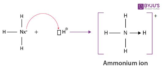 Formation Of Ammonium Ion