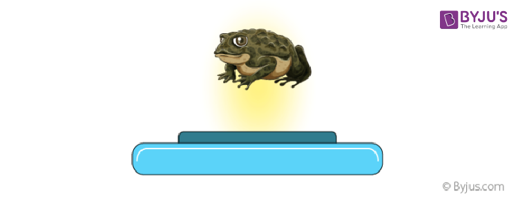 Frog in a magnetic field