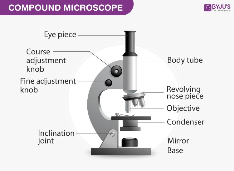 Diagram of Compound Microscope