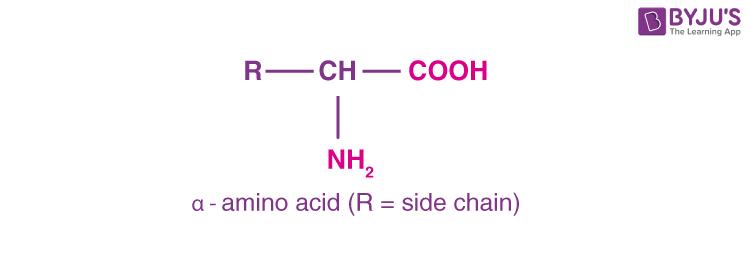 Alpha Amino Acid