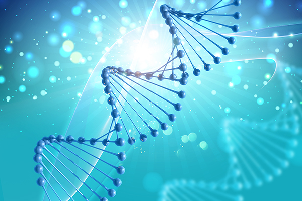 DNA is the basic building blocks of life