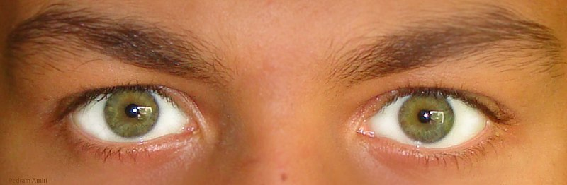 Due to the space between the eyes, each eye captures a slightly different image. Image source: Wikimedia Commons